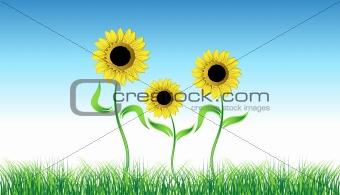 Sunflower on green field