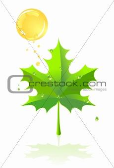 Green leaf of a maple and rain against the sun. A vector illustr