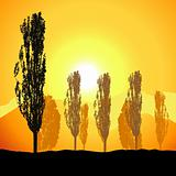 Tree silhouette, landscape