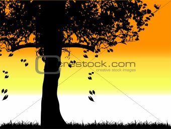 Tree silhouette old, grass, summer