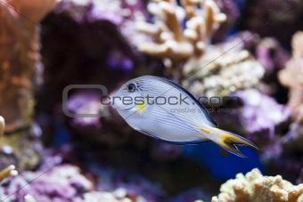 marine aquarium fish tank