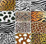 Animal skins