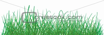 green grass pattern on white background. vector