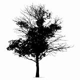 Tree silhouette black