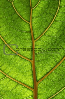 bright close-up green leaf structure