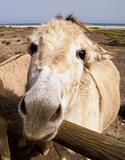 Inquisitive donkey