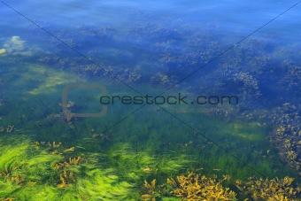 Algae in the ocean floor