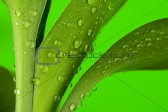 Three bamboo leaves