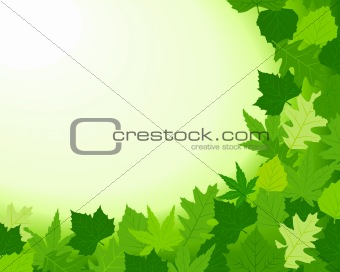 Spring background with foliage and copy space