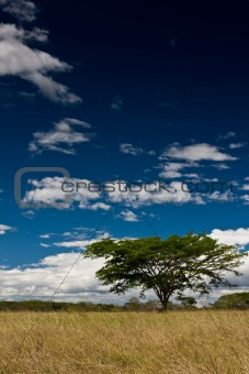 Single tree in open field