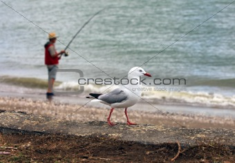 Fisherman and seagull