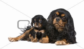 Cavalier King Charles mother and pup