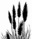 Pampas Grass Silhouette