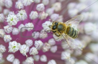 Tops of flower with bee, macro image with very shallow dof and b