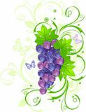 Grapevine with drops of water against green leaves, vector illus