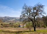 Old Barn and Oak Tree in Landscape