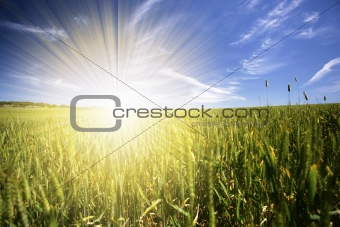 beautiful spring landscape with daisies and sunrays