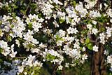 White Flower On Tree