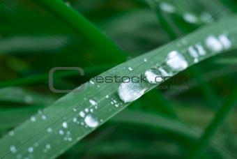 Wet grass.