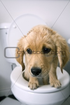 Types Of Diarrhea In Dogs Pictures To Pin On Pinterest