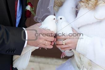 kiss of white pigeons