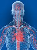 human brain and heart