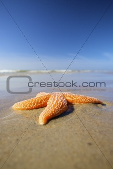 an orange sea star on the beach with a blue sky