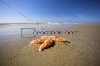a seastar on a beach with a blue sky in summer