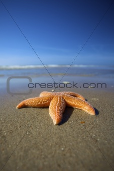a sea star on a beach with a blue sky in summer