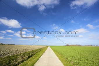 an empty country road with fresh green meadows in summer
