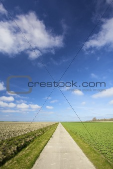 an empty country road in the countryside with fresh green meadows in summer