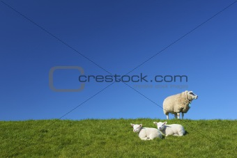 Cute lambs and a sheep in spring on a green field
