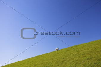 a cute lamb in spring running down a hill