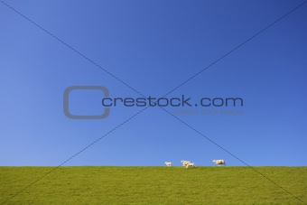 a sheep and cute lambs running