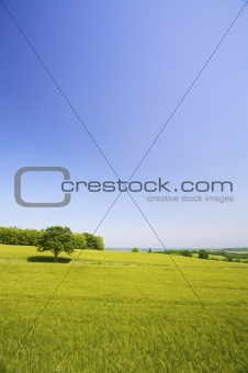 a fresh field of green grass on a hill in summer with a blue sky