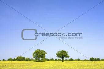 a fresh and bright field of grass with a vibrant blue sky