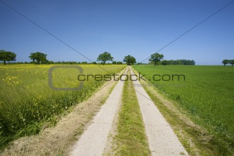 an emty country road through fresh green meadows in summer