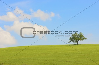 A fresh field of green grass and a bright blue sky