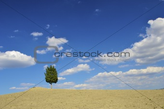 A lonely tree in the field with a clear blue sky and clouds
