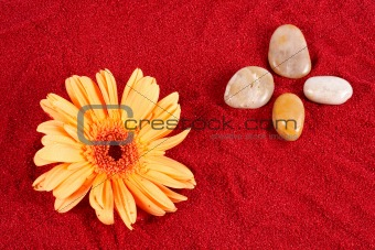 Daisy and four stones on the sand