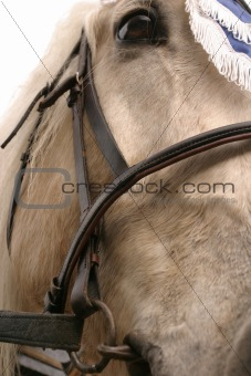 portret of horse