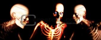 Human Bones 100