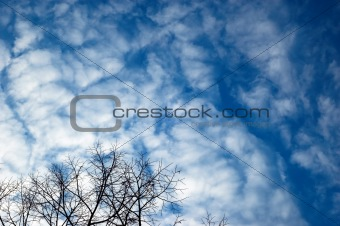 Black silhouette of tree on the cloudy sky background