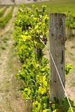 Vine Post