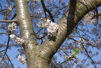 Breaking Spring