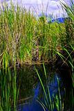 Water Grass 03
