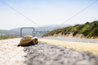 Tortoise On The Road
