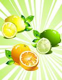 Set citrus fruit. Vector