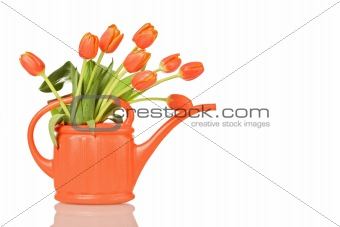 Beautiful tulips in orange watering can