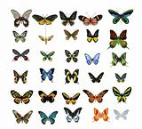 many multicolored butterflies on a white background